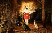 Luigi Presicce - La benedizione dei pavoni